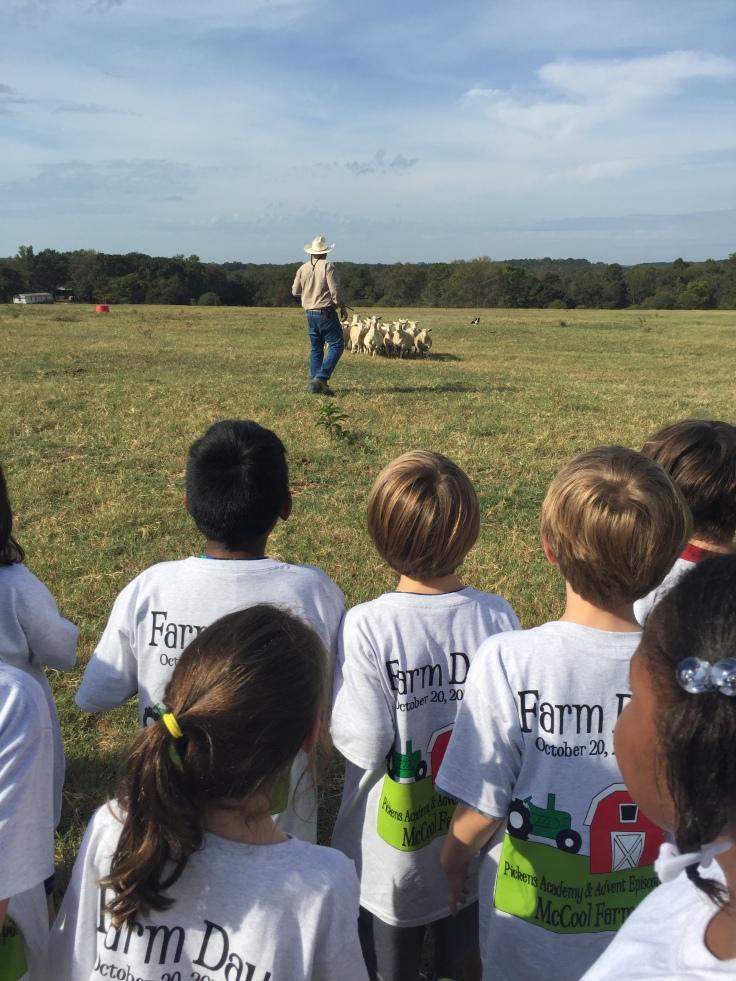 3rd-farm-blog-5-2016